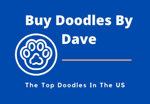 Doodles for sale