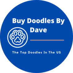 Buy Doodles By Dave Logo